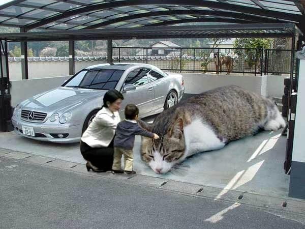 Cat_In_Parking.jpg